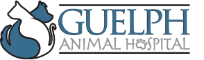 Guelph Animal Hospital Home