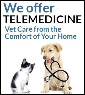 We offer Telemedicine. Vet care from the comfort of your home